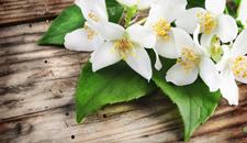 Ajurvédske prírodné masážne a pleťové oleje - Jasmín